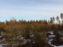 Небо лесных деревьев ландшафта природы Стоковые Фото