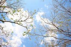 Небо деталей стоковое изображение rf