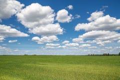 Небо заволакивает поле Стоковая Фотография RF