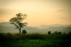 Небо захода солнца в естественных пейзаже, лугах и деревьях стоковое изображение rf