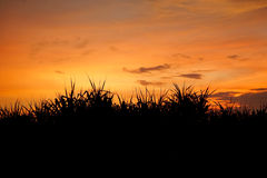 Небо захода солнца за травой стоковое фото