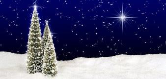 Небо звезды рождественских елок стоковые изображения rf