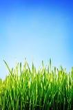 небо зеленого цвета поля предпосылки голубое Стоковые Фото