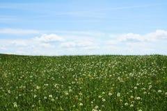 небо зеленого цвета травы облаков blowballs голубое стоковая фотография rf