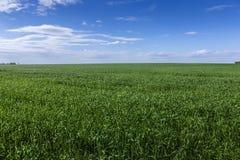 небо зеленого цвета травы поля Стоковые Изображения RF