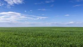 небо зеленого цвета травы поля Стоковое фото RF