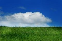 небо зеленого цвета травы Стоковая Фотография