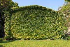 небо зеленой дома eco Стоковые Изображения