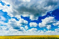Небо зеленого поля голубое Раннее лето, цветя рапс oilseed Стоковое Изображение RF