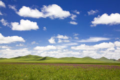 небо злаковика Стоковое Фото