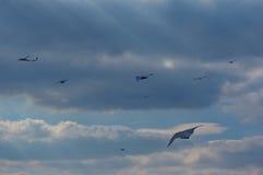 небо змеев змея празднества berkeley Стоковое фото RF
