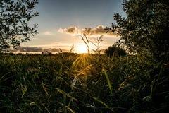 Небо золота стоковая фотография rf