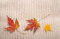 небо листовых золот рамки граници осени голубое Стоковые Изображения