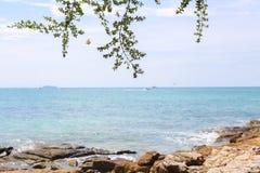 Небо и бабочка моря дерева стоковая фотография