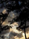Небо и деревья облаков во время захода солнца стоковые фотографии rf