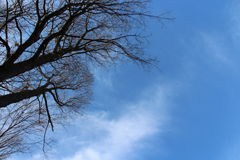 Небо и деревья стоковое изображение rf