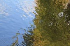 Небо и зеленое дерево отраженные в воде стоковое фото rf