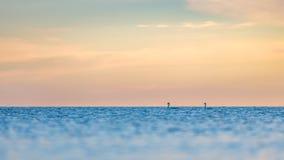 Небо и лебеди утра на горизонте стоковые фотографии rf
