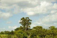Небо и мир Стоковое Изображение