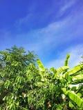Небо и облако Beuatiful голубое с зеленым laef дерева стоковая фотография rf