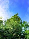 Небо и облако Beuatiful голубое с зеленым laef дерева стоковые изображения rf
