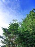 Небо и облако Beuatiful голубое с зеленым laef дерева стоковые фотографии rf