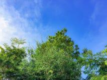 Небо и облако Beuatiful голубое с зеленым laef дерева стоковое изображение rf