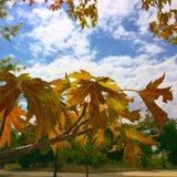 Небо и разрешение Стоковое фото RF