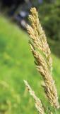 Небо и трава Стоковое Изображение RF