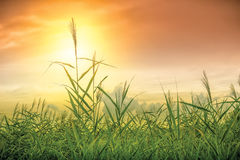 Небо и трава Стоковые Фотографии RF