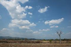 Небо и тропическая атмосфера. Стоковое Фото