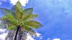 Небо и Cyantheacea Стоковые Изображения RF
