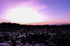 Небо красивого солнца установленное в мягко розовом и фиолетовом цвете для природы b Стоковое фото RF