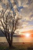 Небо красивого сценарного солнца установленное на zea queenstown wakatipu озера новом Стоковая Фотография RF