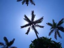 небо ладоней Стоковая Фотография