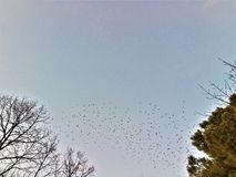 Небо, летящие птицы, миграция, деревья, свобода и вечность стоковое фото rf