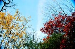 небо листва осени голубое Стоковая Фотография RF