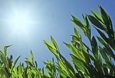 небо листьев голубого зеленого цвета Стоковое Изображение RF