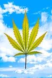 небо листьев осени голубое Стоковое Фото