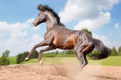 небо лошади предпосылки действия голубое Стоковое Изображение