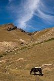 небо лошади Стоковое Изображение