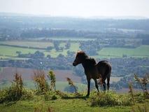 небо лошади Стоковые Фотографии RF