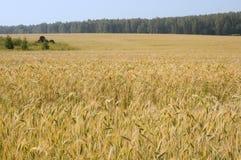небо лужка травы одичалое Стоковое Фото