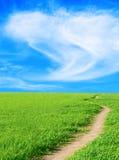 небо майны травы предпосылки вертикально стоковые изображения