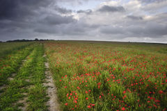 небо мака драматических полей унылое под живой Стоковое Фото