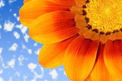 небо маргаритки Стоковые Фото