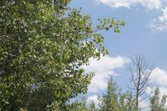 Небо Монтаны Стоковые Фото