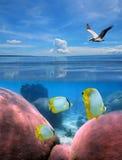 небо морского дна Стоковые Изображения RF