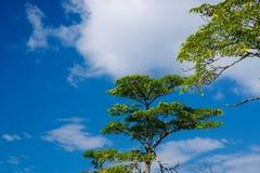 небо моря langkawi холма Стоковые Фото