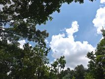 Небо над тропическим лесом Стоковое Фото